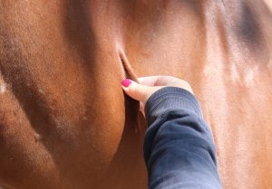 vocht te kort paard controleren
