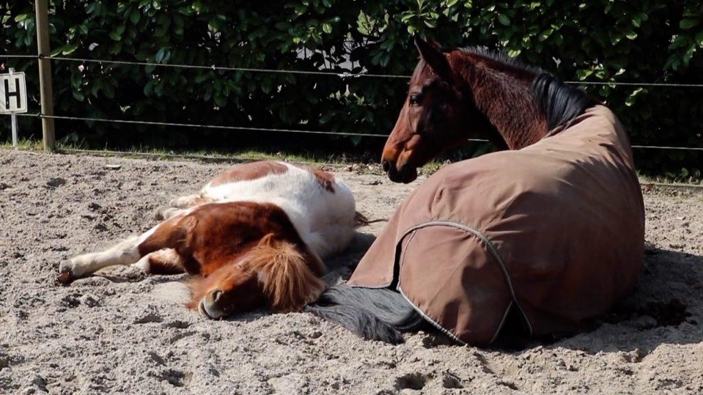 paard in de zon