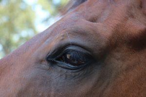slijmvlies oog