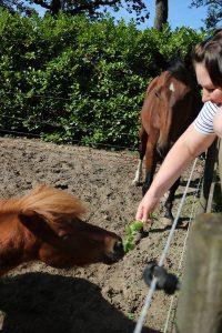 Salie voor paarden