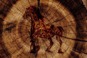 element hout bij paarden
