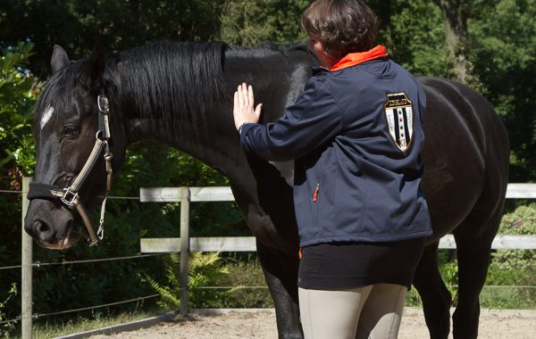 Bowen Therapie Equine Touch