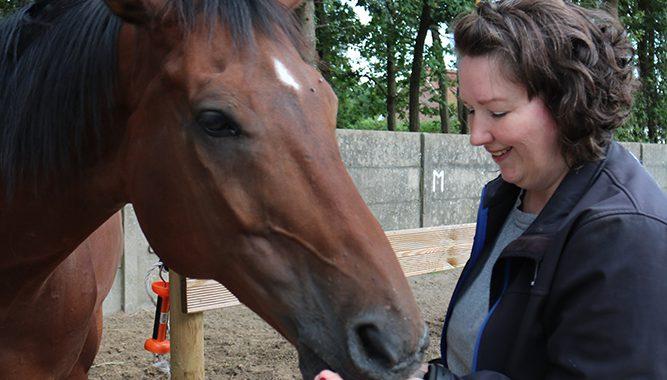 Homeopathie voor paarden