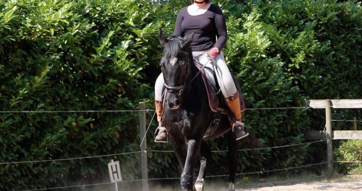 Paardrijden zonder stress