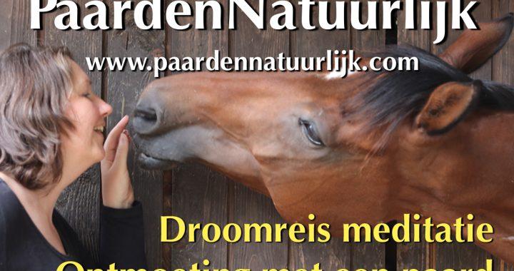 Droomreis meditatie; ontmoeting met een paard