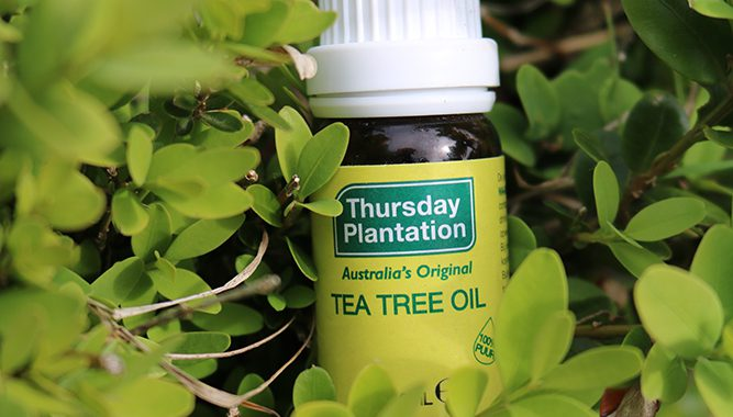 Aromatherapie paard; tea tree