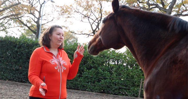 HSP hoog sensitief en paarden