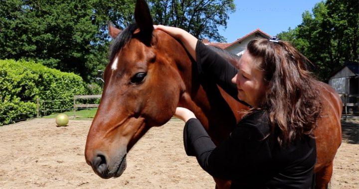 Astrologie bij paarden