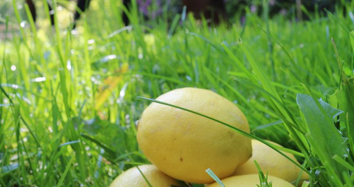 Aromatherapie paard; citroen