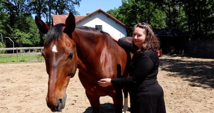 4e chakra bij paarden