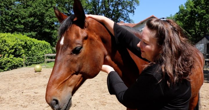 5e chakra bij paarden