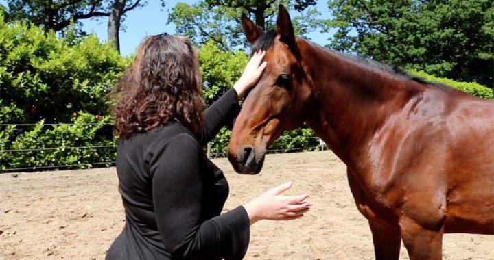 6e chakra bij paarden